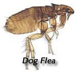 fleaDog